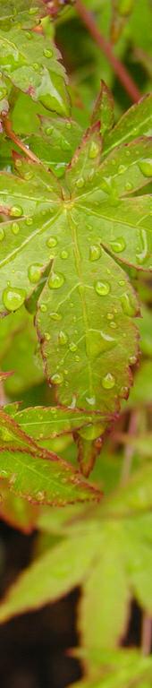 leaf_crop